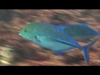 Акулий остров Найджела Марвена (3 серия) (Документальный, 2007)