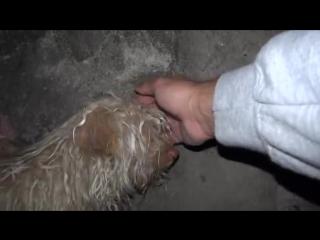 Индийские ветеринары спасли испуганную бездомную собаку из канализационного тоннеля