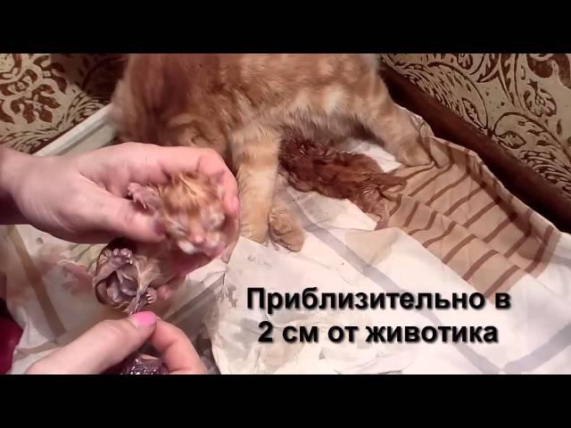 Самое трогательное 10 минутное видео про рождение котенка Видеоинструкция