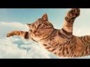 ПРИКОЛИ про котів