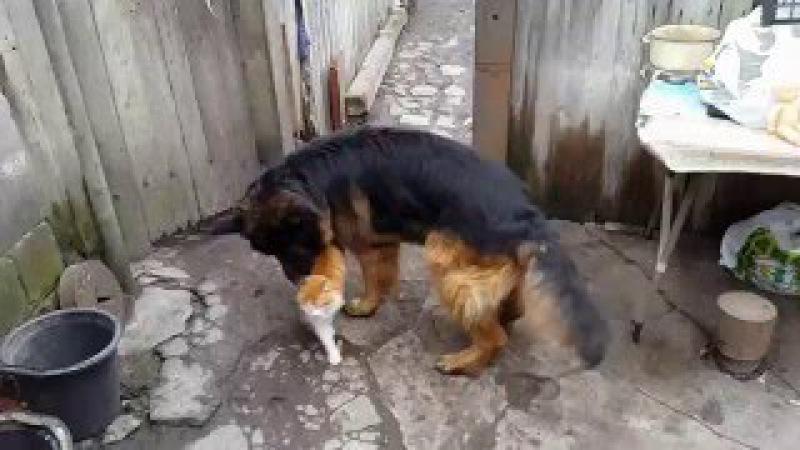 Собака дрюкает кота в прямом смысле!СМОТРЕТЬ ВСЕМ!