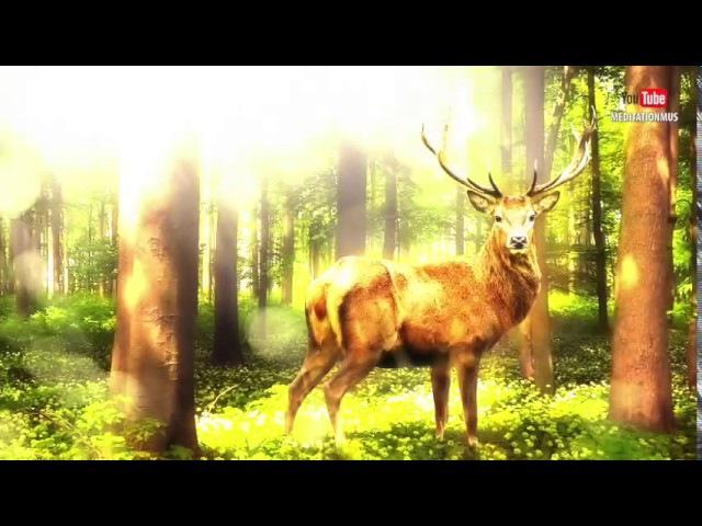 Очень Красивая Кельтская Музыка Для Медитации И Релаксации Relaxing Celtic Music