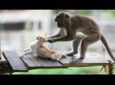 Animals fail Best Funny : Monkey vs Cat | Funny Pet Videos Khỉ và Mèo Hài hước