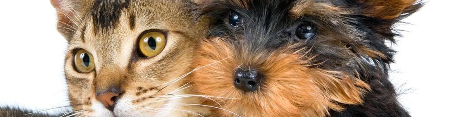 Стрижка собак и кошек Сызрань | ВКонтакте