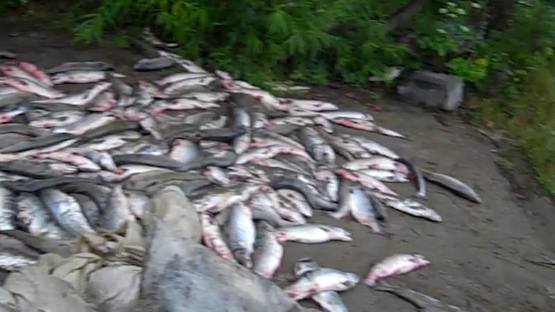 09 06 2018 Охинских браконьеров осудили на два с половиной года
