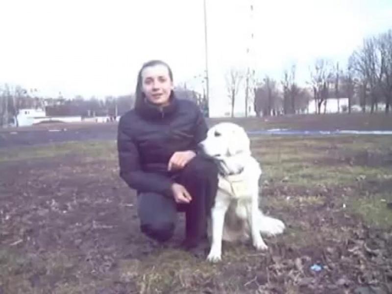 клещи - как защитить собаку Чем обрабатывать собаку от клещей