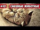 Эти смешные животные 10 Bazuzu Video ТОП подборка май 2017