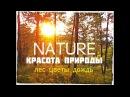 RELAX ☯ Лес после дождя / Красота природы
