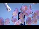 Diskusfische Fütterung mit Tubifex