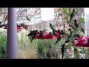 Hummingbird frenzy