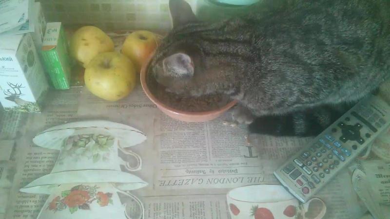 мой кот ест семки xD