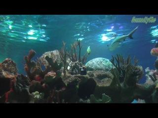 Обитатели Санкт-Петербургского океанариума