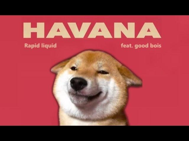 Havana Shibe cover