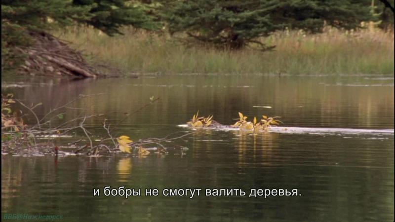 BBC «Йеллоустоун: Борьба за жизнь (3). Осень» (Документальный, природа, животные, 2009)