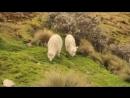 V-s.mobiLeo Rojas - Der einsame Hirte Одинокий пастух.mp4