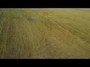 Syma X5C 03082018 Мордовия автодорога Саранск Ковылкино Ковылкинский район с Кочелаево Жнива
