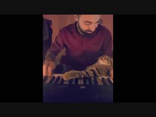 Пианист играет для своих котов. Очень мило))