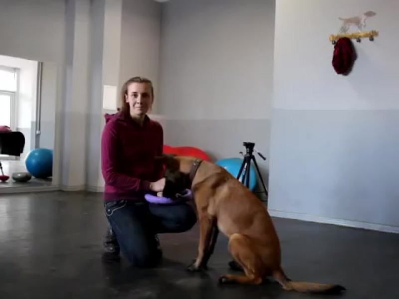 Дог фитнес. Разминка собаки перед любыми тренировками, выставками и прогулкой.