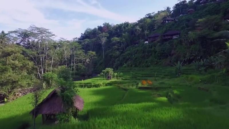 MUST Do- UBUD, Indonesia - Little Grey Box