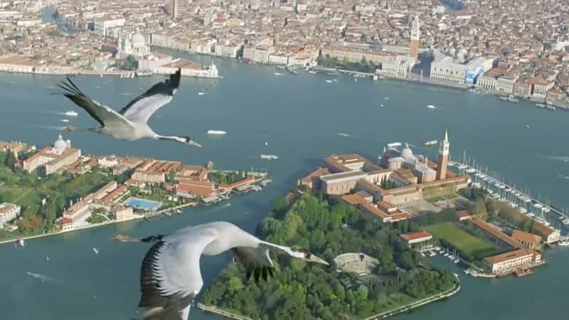 Журавли над Венецией [Earthflight Europe]