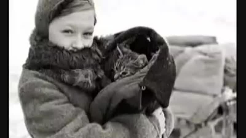 Как кот Васька спас семью от голода во время блокады в Ленинграде