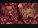 DISFIGUREMENT OF FLESH Herbarium With Grotesque Necrotic Malformations