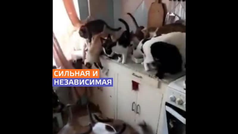 Женщина из Барнаула поселила у себя 72 кошки — Москва 24