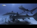 Ужас тигровой акулы_Nat Geo Wild_ DenV.