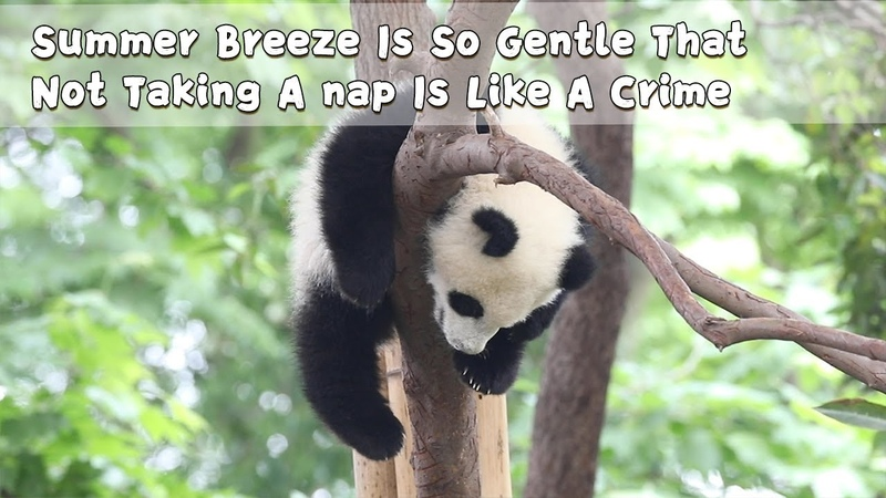 Summer breeze is so gentle that not taking a nap is like a crime iPanda