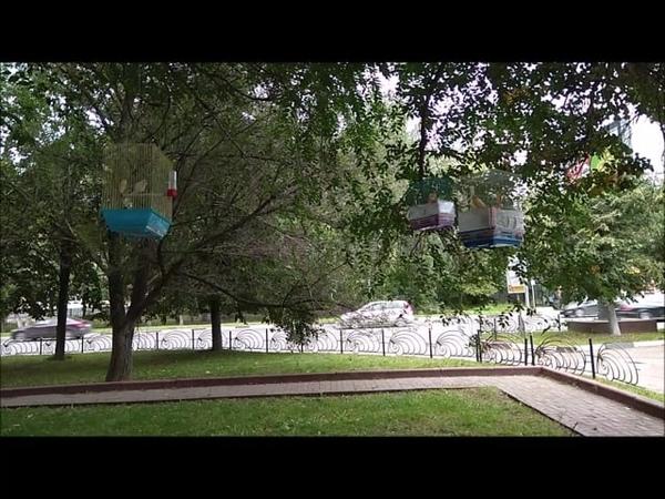 Пташки канарейки