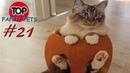 ПРИКОЛЫ 2019, ТОП СМЕШНЫХ ВИДЕО С КОТАМИ/Смешные животные/Смешные кошки/TOP FUNNY PETS 21