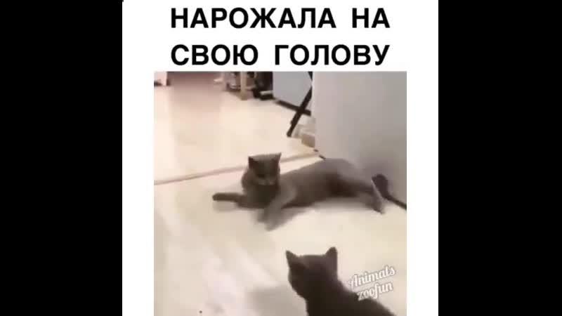 Тыгыдымские жеребята😃