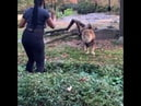 Woman Climbs into Lion Exhibit at the Bronx Zoo Appears to Taunt the Animal in Viral video