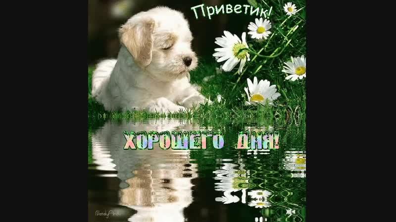 Doc208253179_501633972.mp4