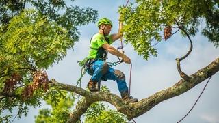 International Tree Climbing Championships 2019