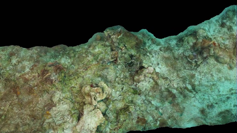 Belize coral forereef 2 photogrammetry