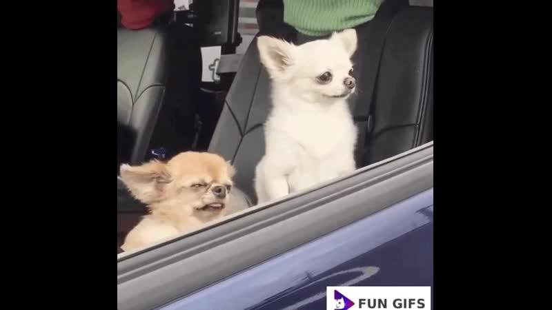 Лучшие видео приколы смешные свежие подборка новинки самые топ интересно смех веселая животные котики 2019 | Fun Gifs .