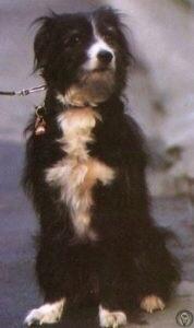 На фото изображен единственный настоящий друг Дениса Нильсена - собака по кличке Блип.