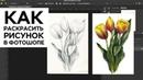 Как раскрасить карандашный рисунок в фотошопе, быстрый способ, картинка для шаттерстока