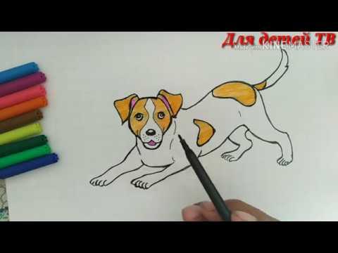 How to draw a Dog Как нарисовать Собаку Itni rasmini chizish Ит суротун тартуу