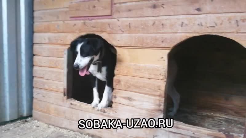 Социализация дичков (пёс Дейк) . Приют Щербинка SOBAKA-UZAO.RU