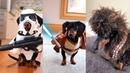 Crusoe s Star Wars Dog Costumes Compilation