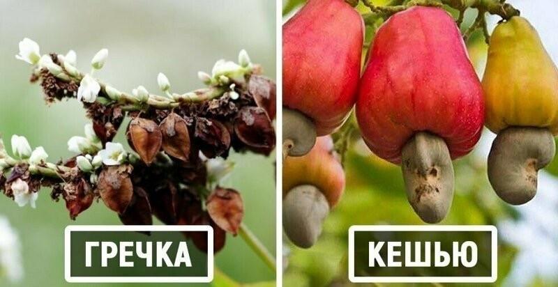 15 удивительных растений, которые вы едите, но не знаете, как они растут