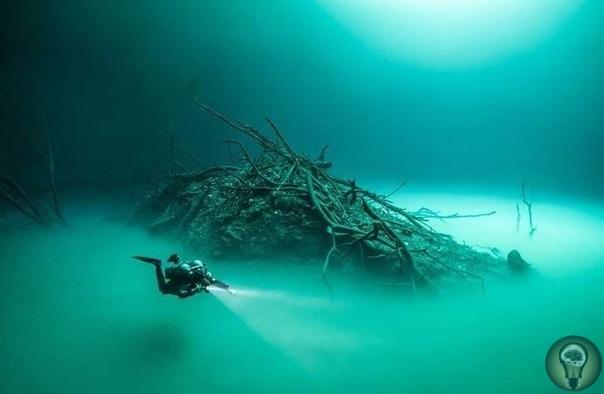 Удивительная подводная река в Мексиканском заливе В двух десятках километров от мексиканского города Тулума на полуострове Юкатане можно найти уникальное место, являющееся культовым для