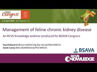 Лечение хронической болезни почек у кошек / Management of feline chronic kidney disease