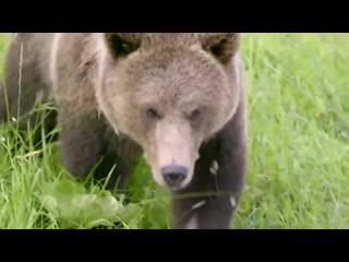 Страна медведей - фильм с Мансуром.