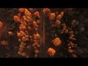 Осень на Андреевском озере