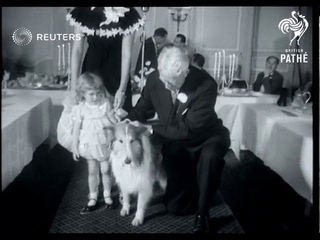 USA: QUIRKY: Collie dog gets award for saving life of three year old girl (1957)