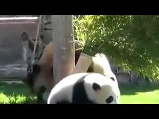 Будь как панда
