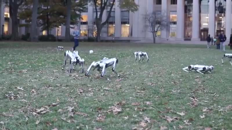 Heres more footage of MITs Mini Cheetahs cavorting, frolicking, back-flipping, playing soc